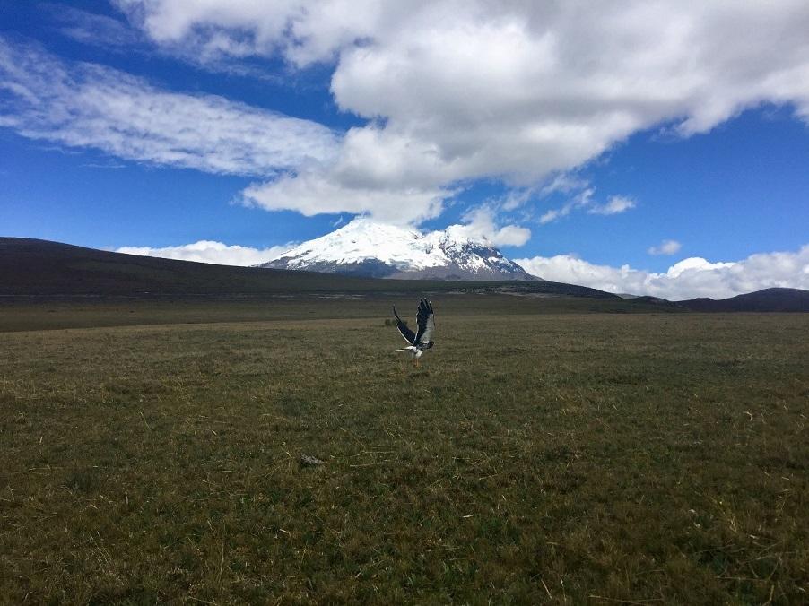 L'Antisana est un imposant volcan recouvert de glaciers juste au Sud-Est de Quito. L'écosystème environnant y est incroyablement diversifié.