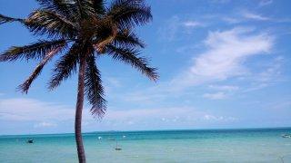 Palmito do Vilanculos – Mozambique