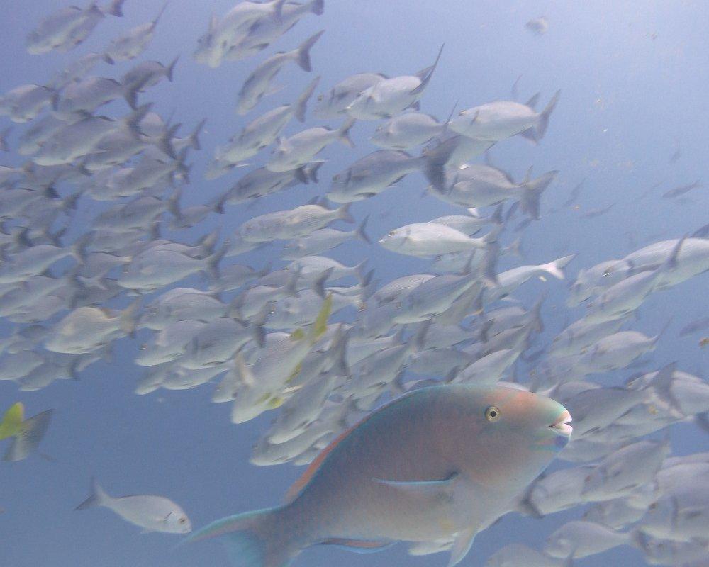 Perroquet – Plongée Galapagos