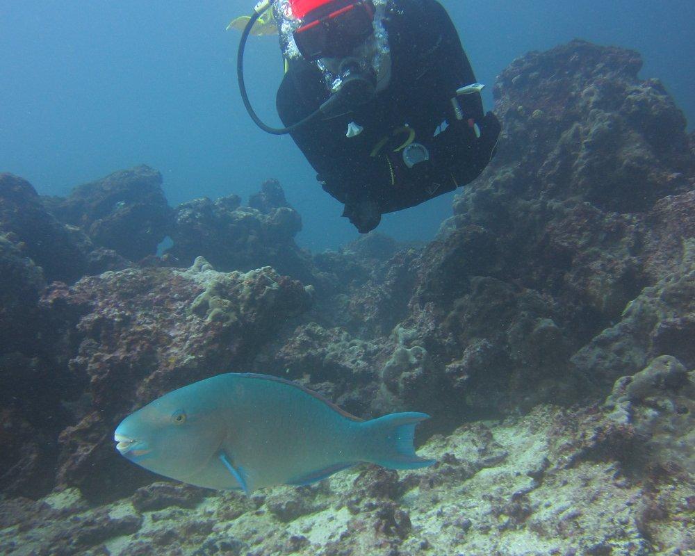 Niko en plongée aux Galapagos