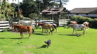 Hacienda La Alegria – Machachi, Equateur
