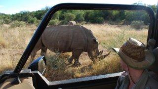 2 rhinocéros blancs et mon ranger dans le parc du Pilanesberg
