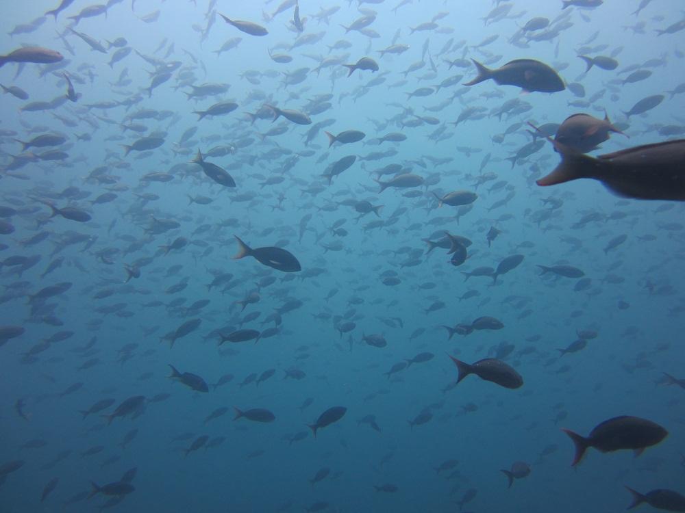 Richesse sous-marine – Plongée Galapagos
