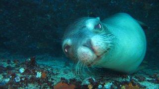 Plongée aux Galapagos dans les palmes de Darwin