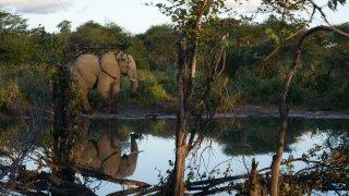Le Delta de l'Okavango, joyau du Botswana