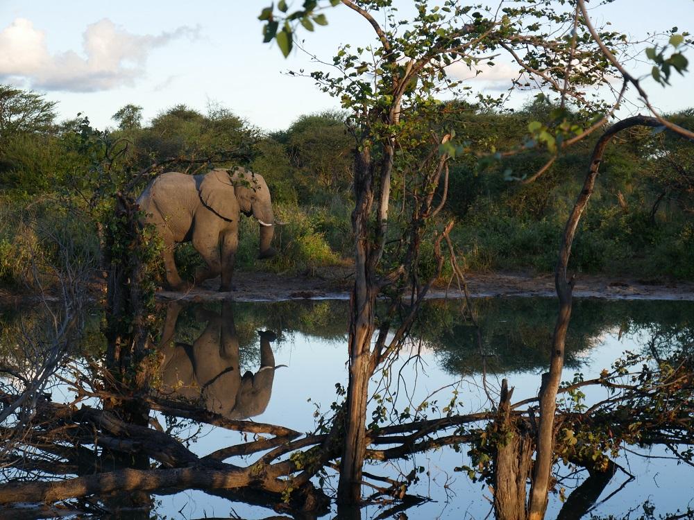 Eléphant au coucher du soleil – voyage Botswana