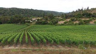 Vignoble La Recova – Chili
