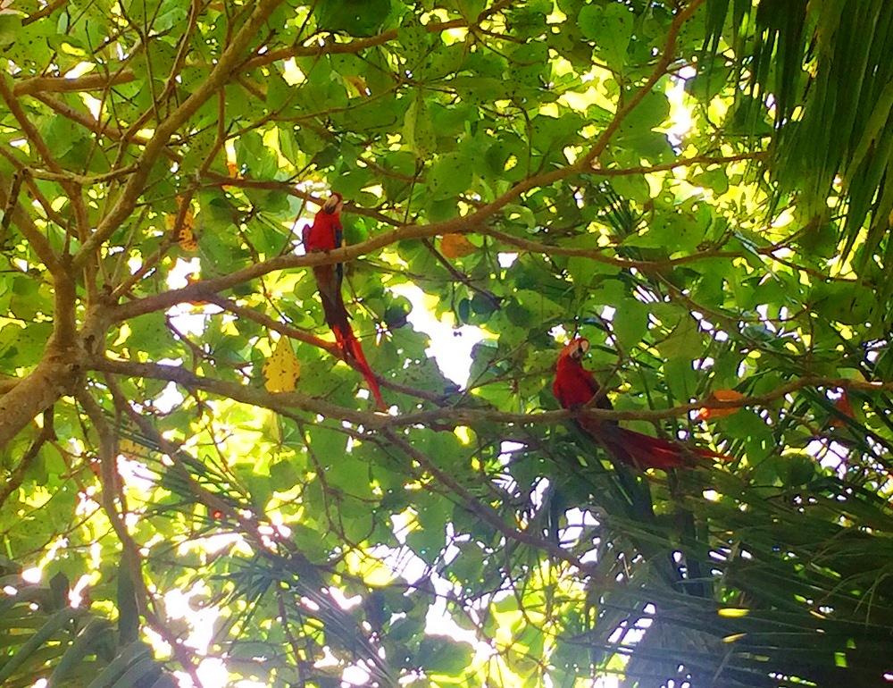 Vie sauvage au Playa Nicuesa Lodge – Costa Rica