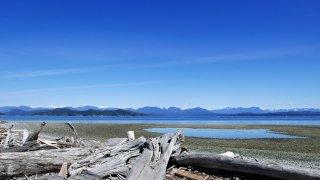 Magnifique plage de bois flotté avec vue sur les montagnes de la côte canadienne