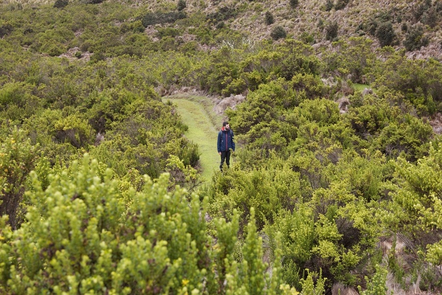 Paysage très vert – Antisana