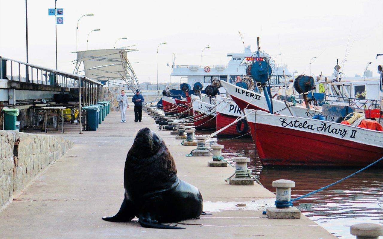 Roberto Carlos, le meilleur copain du Port de Punta del Este – Voyage Uruguay