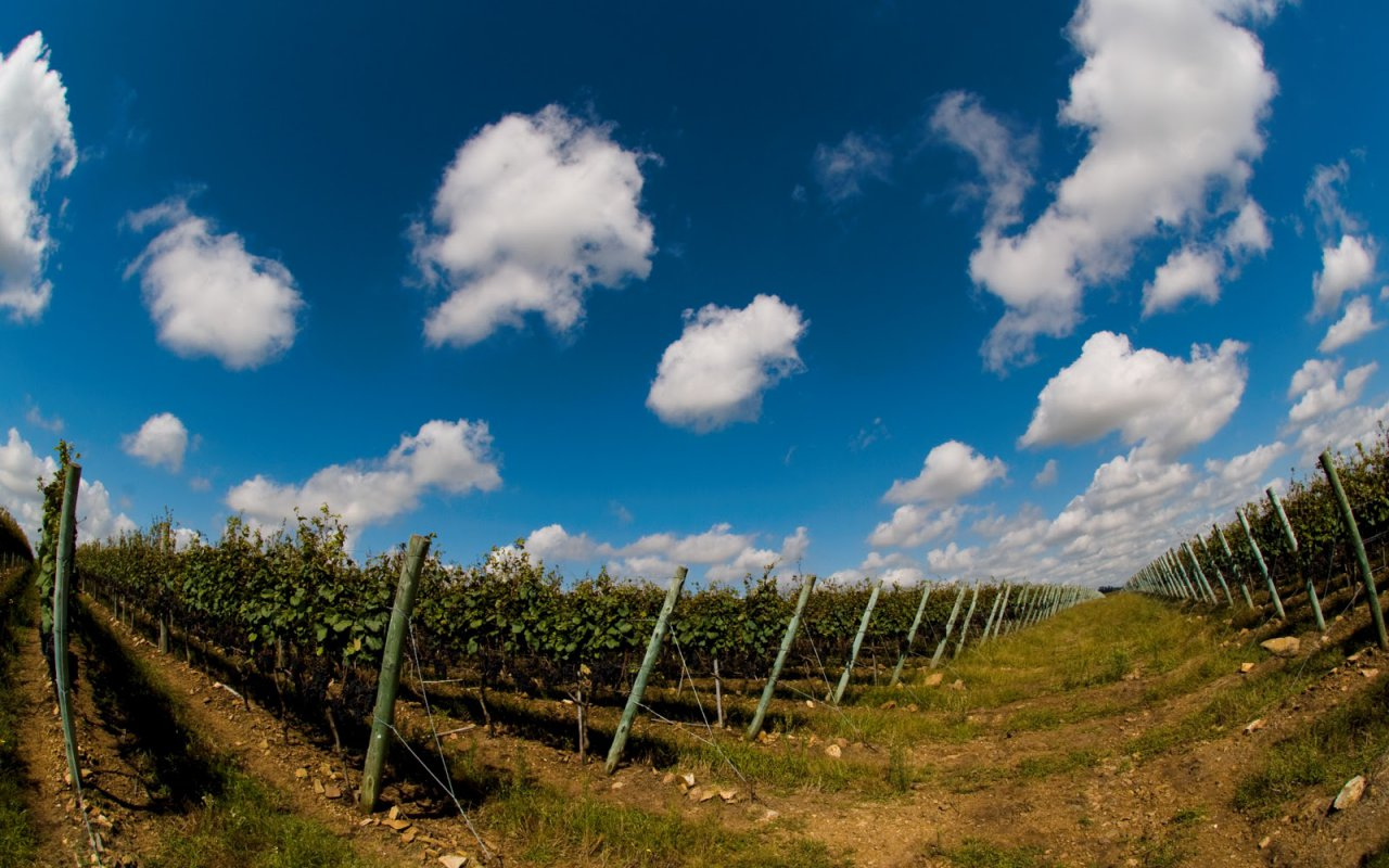 Les vignobles en Uruguay