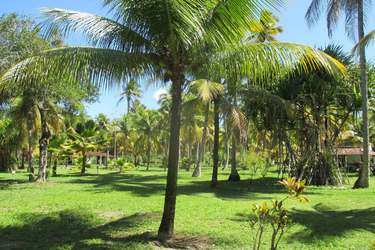 Jardin de la Pousada Guaiamu, Morro de São Paulo – voyage de noces à Bahia au Brésil