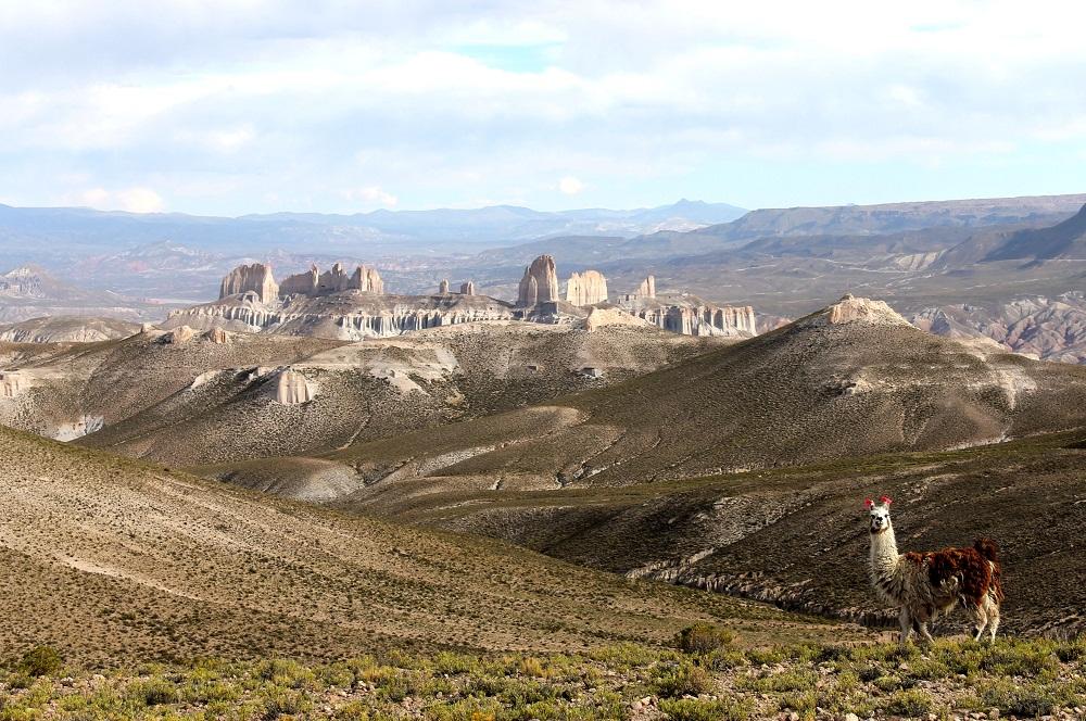 Lama face à la Ciudad de Roma – Bolivie