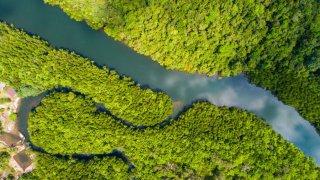 Equateur : aventure amazonienne au Napo Wildlife Center