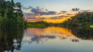 Brésil, à la recherche du jaguar au Pantanal Nord