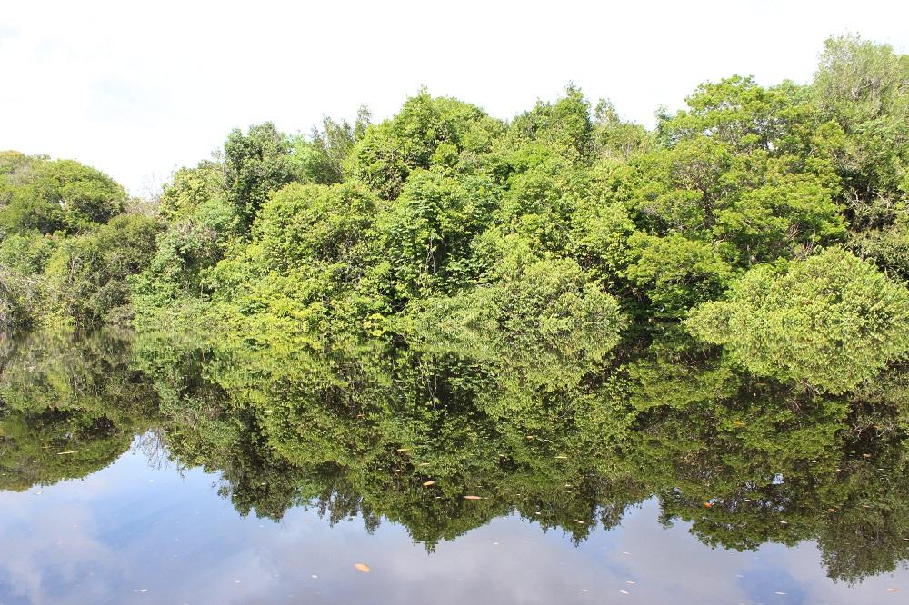 Navigation sur les eaux du Rio Negro, archipel Anavilhanas, Brésil