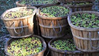 Bacs d'Olives, Jaen, Espagne