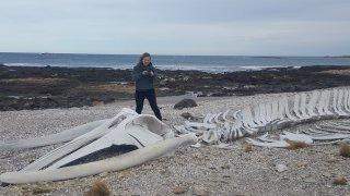 Squelette de baleine à côté de l'oeuvre de Boltanski à Bahia Bustamente – Patagonie argentine