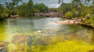 Baignade en mode SPA tropical – Caño Cristales, Colombie