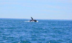 Observation des baleines grises au Mexique