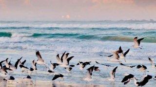 Afrique du Sud et Mozambique: du Parc Kruger aux plages paradisiaques