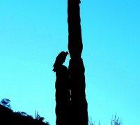 Cactus de Basse Californie au Mexique