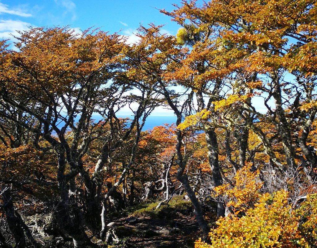 Cerro Mirador La Patagonia