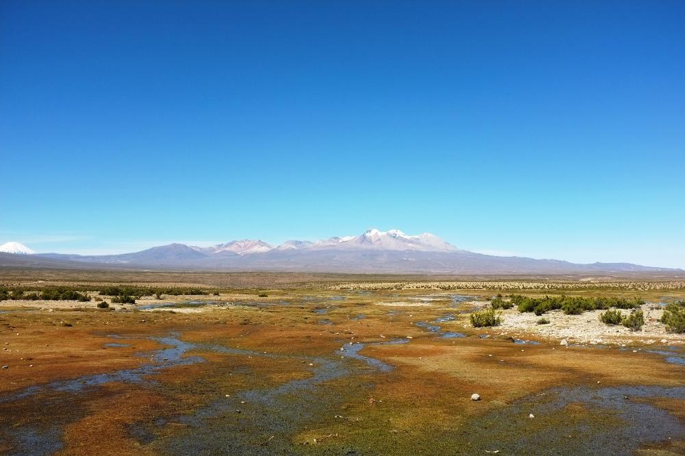 Bofedal – Altiplano
