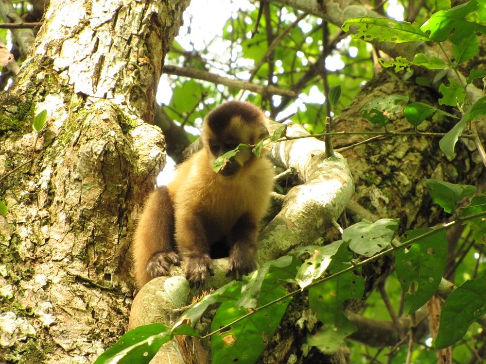 Observation de la faune – Estancia mimosa à Bonito