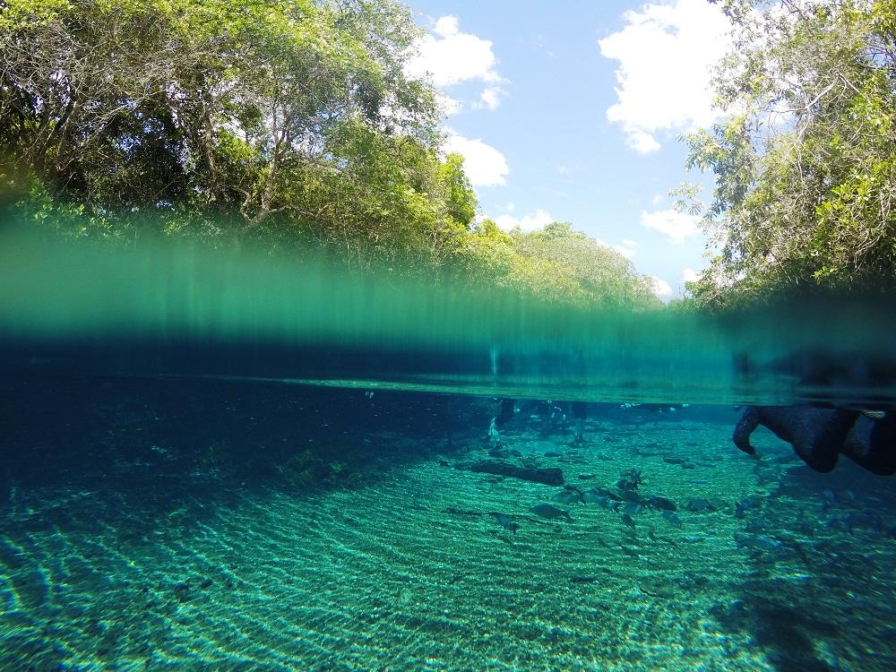 Snorkeling à Rio da Prata, Bonito