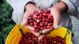 Voyage au Costa Rica : la vallée centrale et la région du café