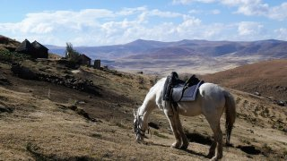Cheval à Semonkong – Lesotho