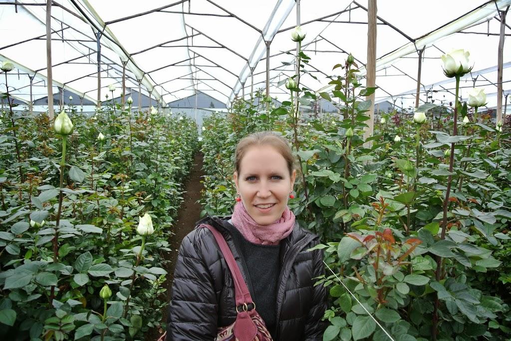 Clara, visite de la plantation de roses – Equateur