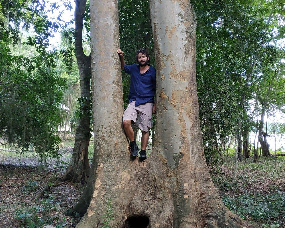 Coco dans un tronc à Calakmul – voyage au Mexique