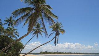Cocotiers – Île de Boipeba