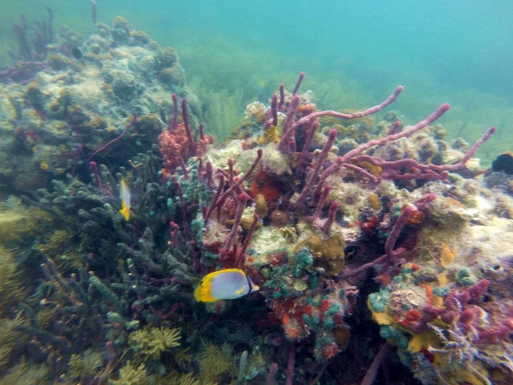 Coraux – Snorkeling à Bocas del Toro – Panama