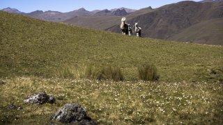 Trek chez les Guérisseurs Kallawayas en Bolivie