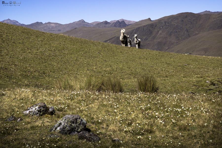 Cordillère Apolobamba – Calaya, Bolivie