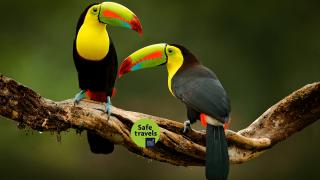 Le top 5 des choses à voir au Costa Rica!