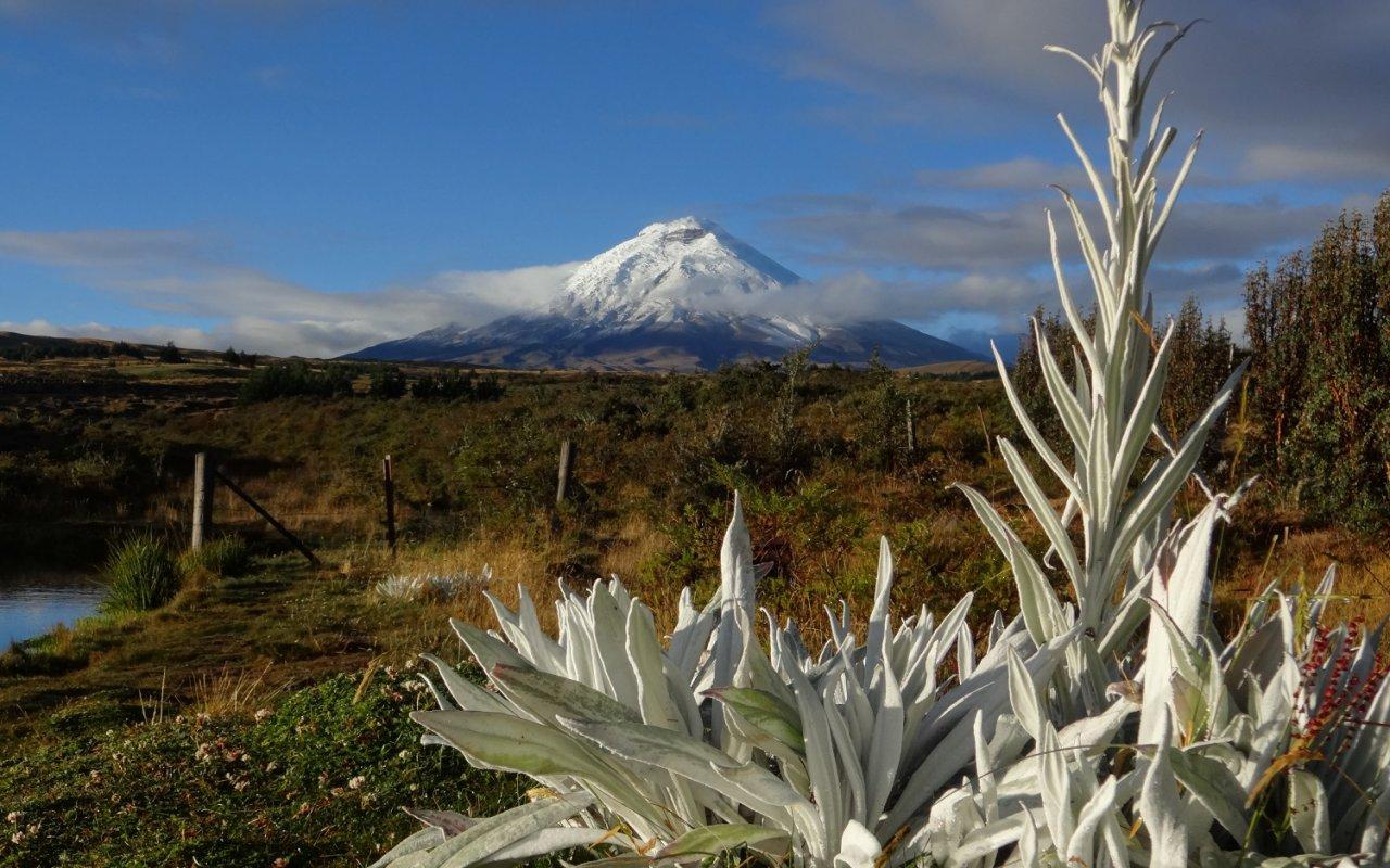 Entre végétation et volcan, Cotopaxi (Equateur) – volcans Amérique Latine – © Sandrine Miguirian/stock.adobe.com