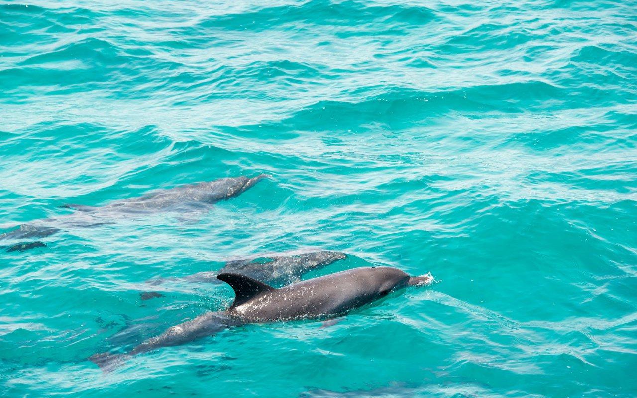 Dauphins à l'île de Losinj – Croatie Séjour en amoureux