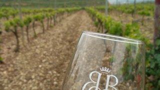 Dégustation de vin dans les vignes de la Bodega Bilbaínas