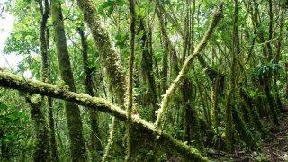 Cap au Sud des Andes en Equateur !