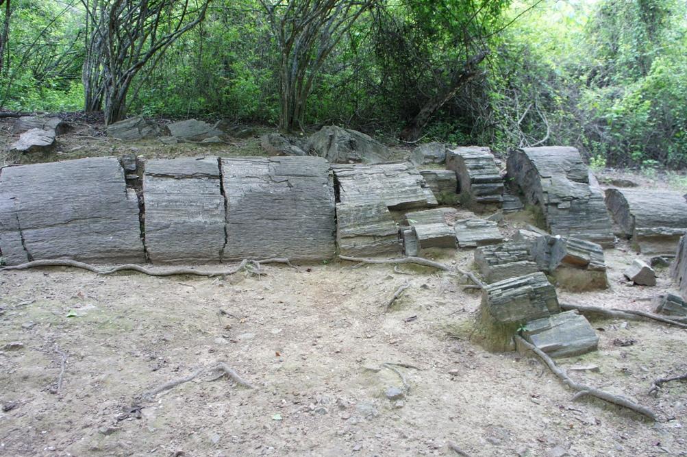 arbre pétrifié à Puyango