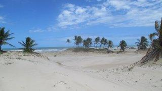 Dunes et cocotiers – Mangue Seco