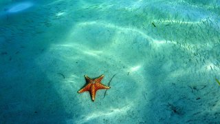 Etoile de mer – Playa de las Estrellas – Bocas del Toro, Panama