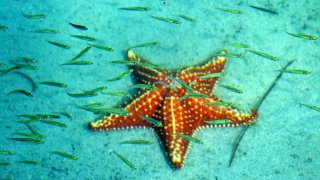 Etoile de mer et poissons – Bocas del Toro – Panama