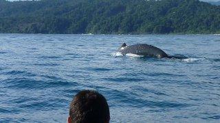 Excursion d'observation des baleines en Colombie