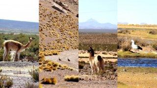 Faune de Bolivie